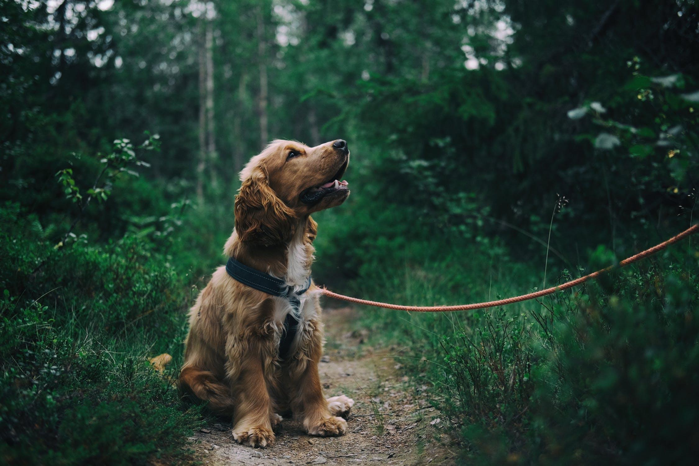 Come viaggiare in camper con un cane o un gatto
